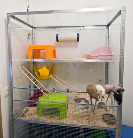 [Paris-RP] Grande cage maison en plexy - 50e Cage14