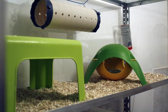 [Paris-RP] Grande cage maison en plexy - 50e Cage3